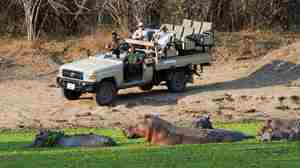 Game drive with hippo